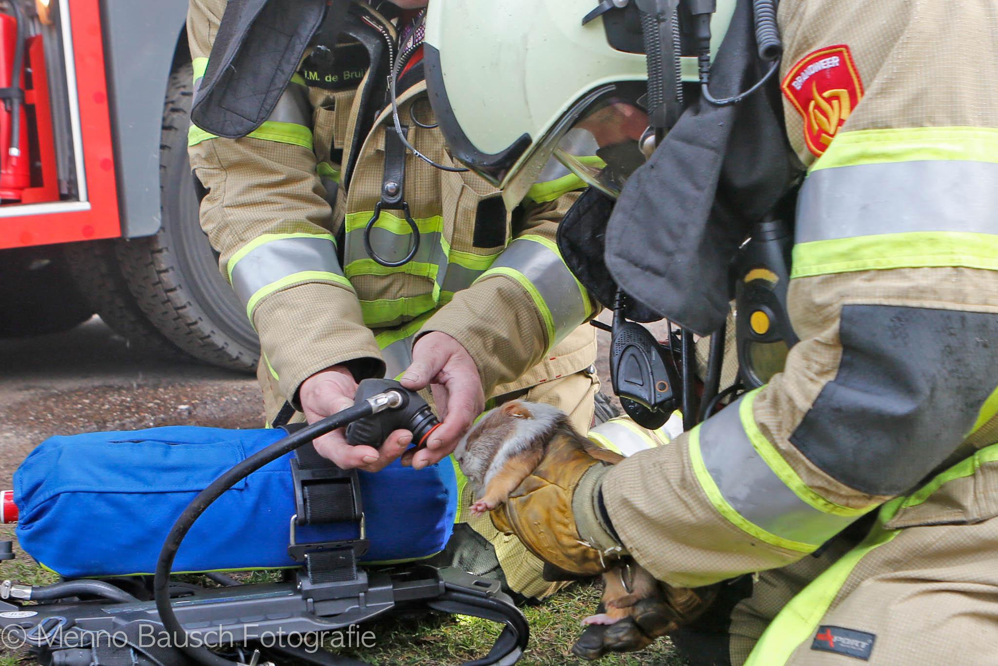 Brandweer reanimeert cavia Bilthoven
