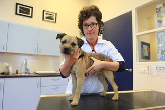 130110 Dierenarts Suzanne onderzoekt hond Utrecht 3-border