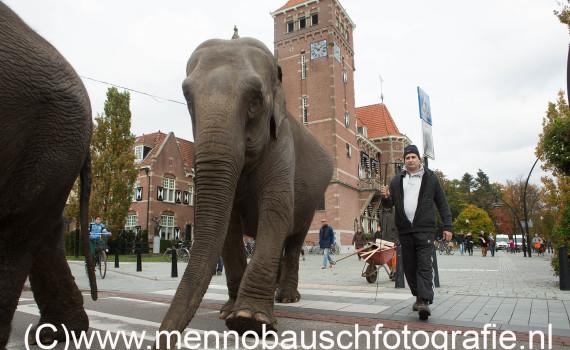 Wandelen met olifanten Zeist